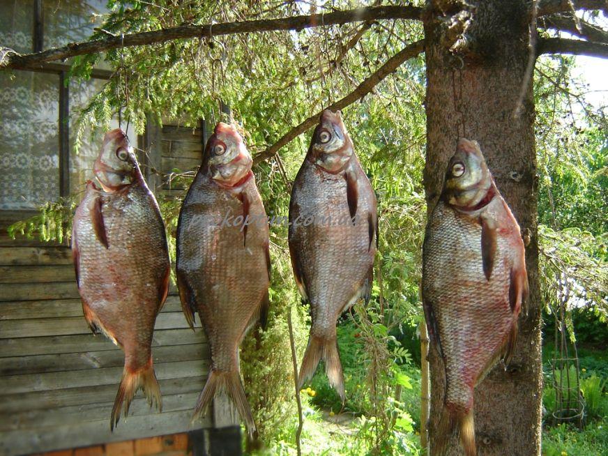 Рыба вывешена для обветривания